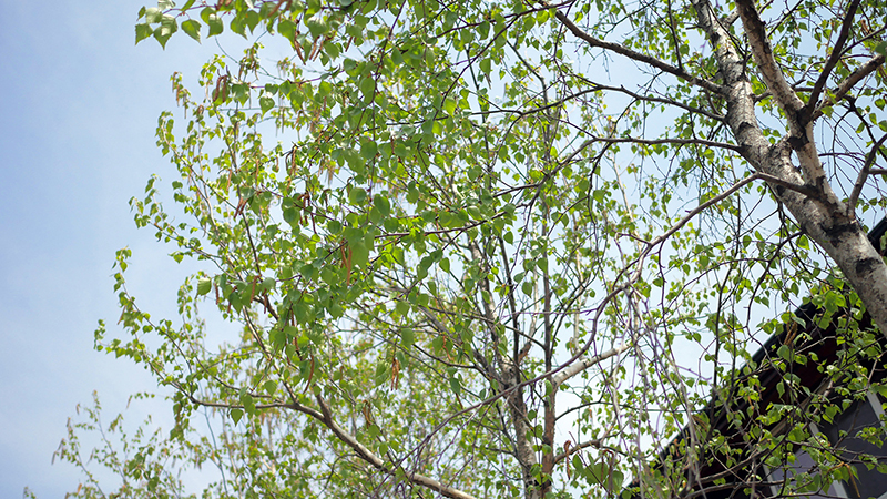 greenseed0502_01.JPG